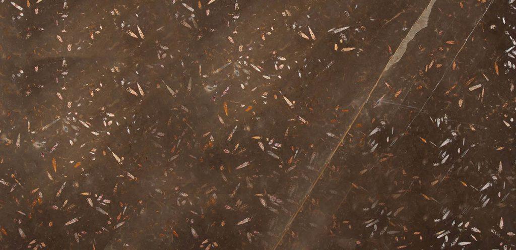 Primer plano - Fosile Brown Nerinea - Close-up