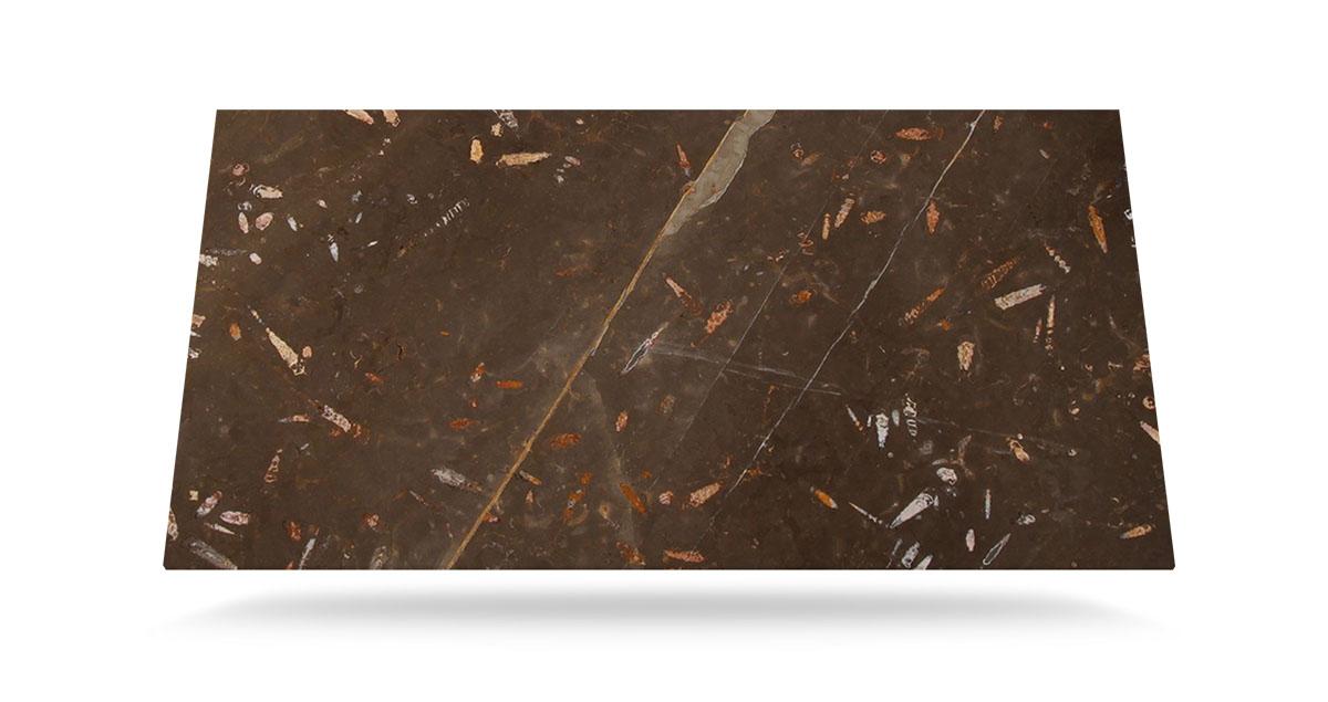 Tabla - Fosile Brown Nerinea - Slab