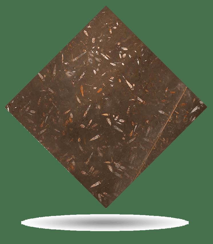 Muestra - Fosile Brown Nerinea - Sample